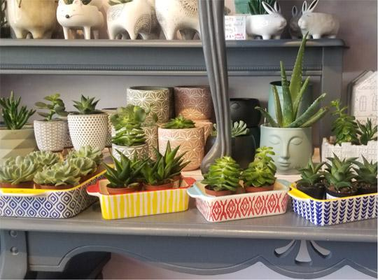 a shelf full of different succulent plants in various coloured trays