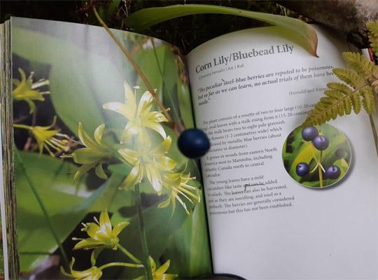 open page of Boulder Books Edible Plants with a Corn Lily