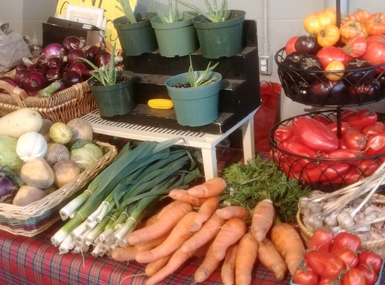 turnip, onion, carrots, tomato, garlic and other produce by the FARM