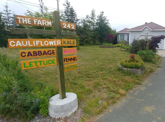 the FARM road sign, leading to the FARM with the words cauliflower, cabbage, lettuce, kale, garlic, fennel, herbs with a house in the background
